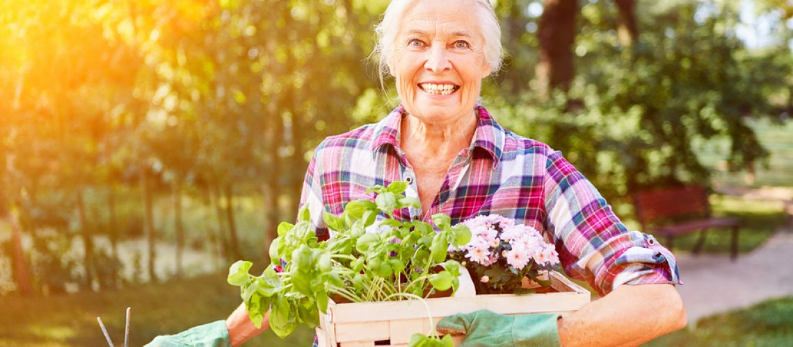 Happy senior woman in summer gardening with flowers and herbs for planting